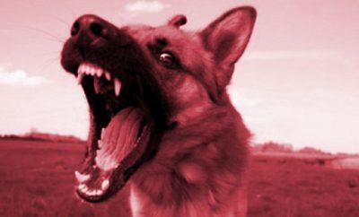 Comment réagir face à un chien agressif